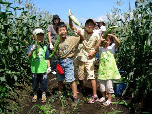 トウキビ畑の子供達